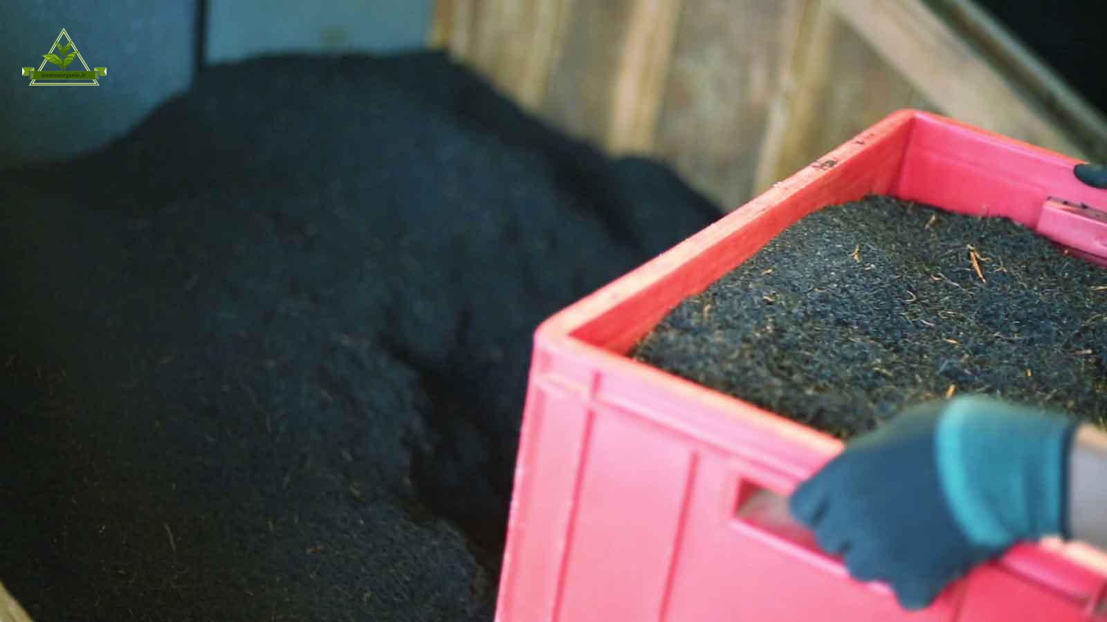 صادرات و فروش عمده چای لاهیجان