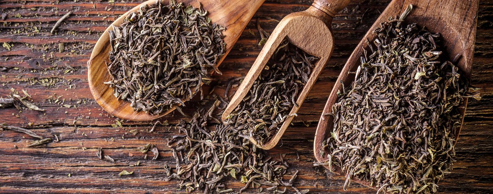 پخش مستقیم چای