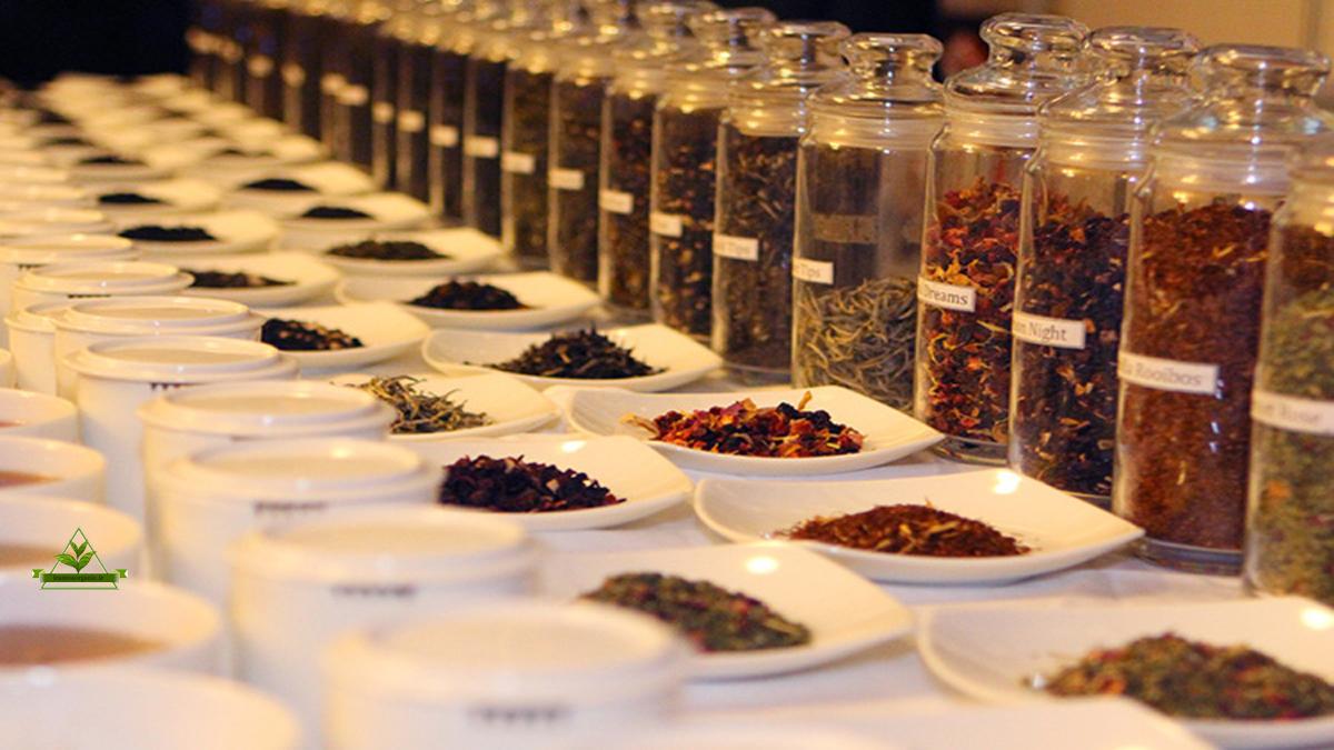 خرید چای بهاره لاهیجان