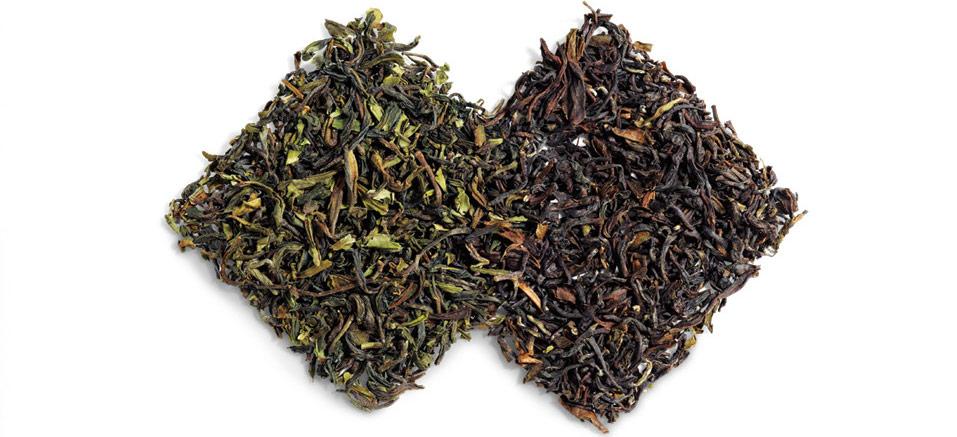 تولید چای شمال