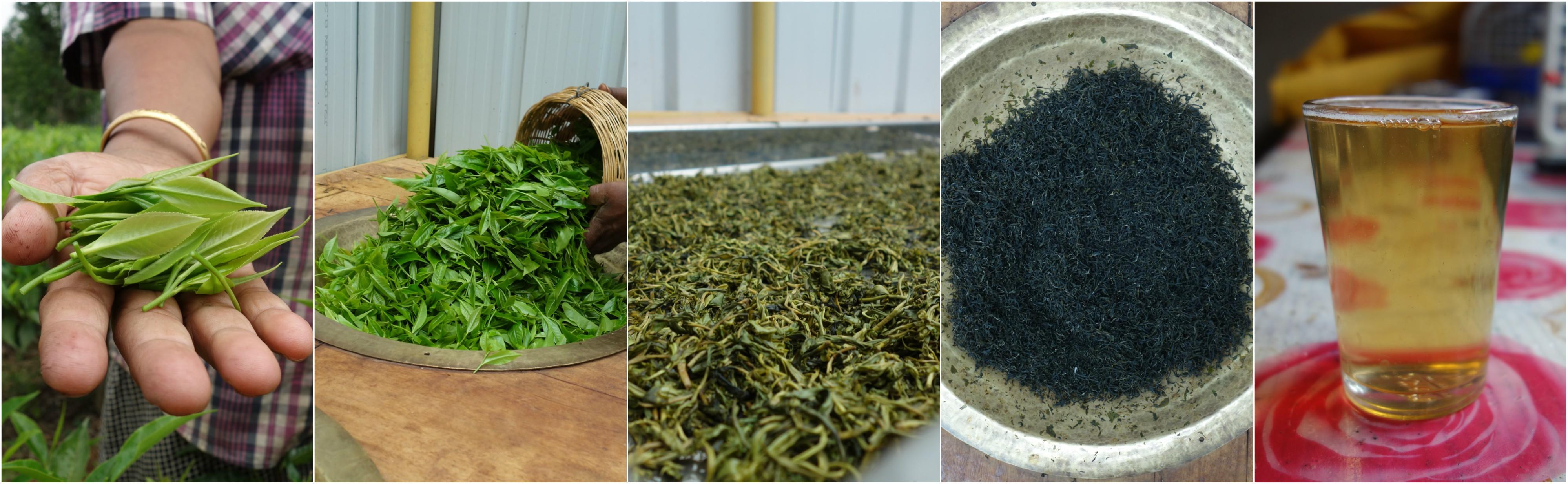 فروش چای سبز ایرانی