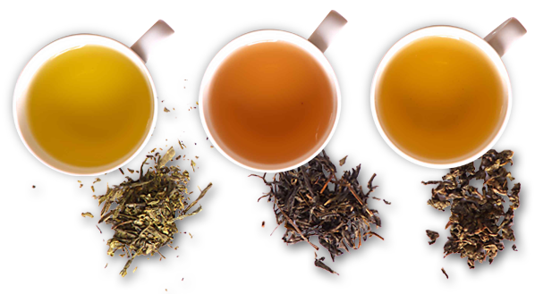 انواع چای بهاره اصل شمال