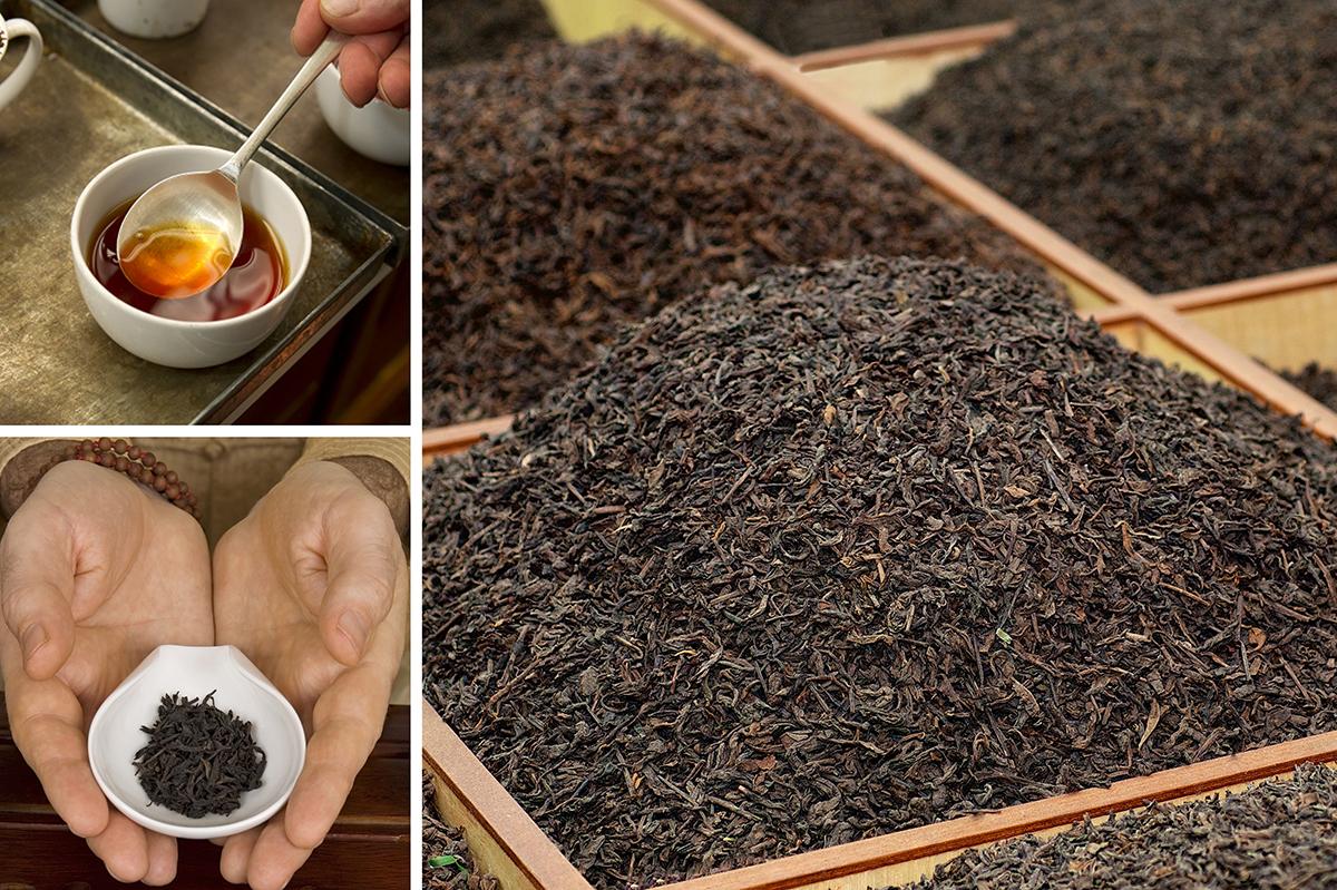 دسته بندی چای بهاره گیلان