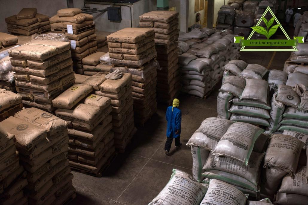 خرید چای ایرانی صادراتی
