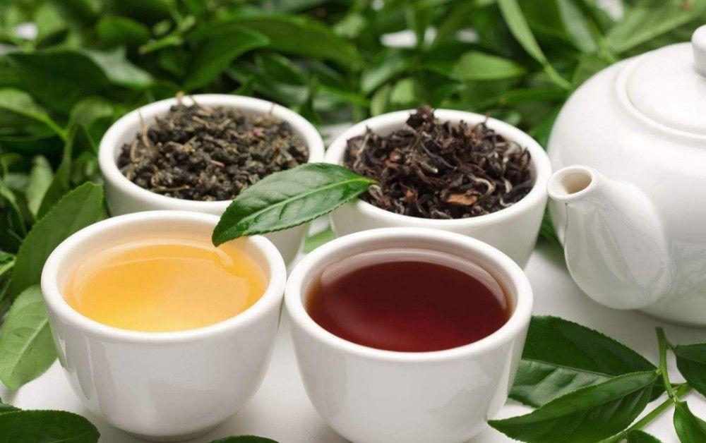 انواع چای ارگانیک ایرانی