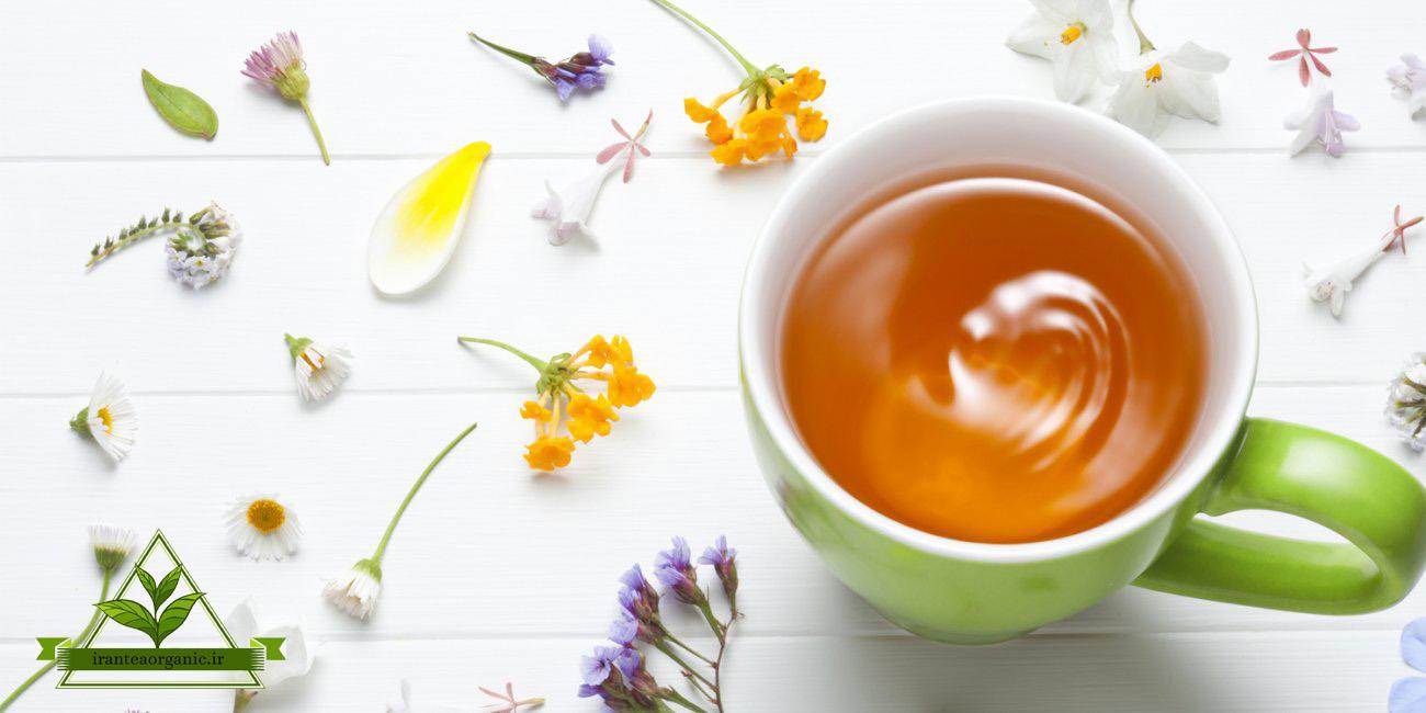 قیمت خرید چای شمال