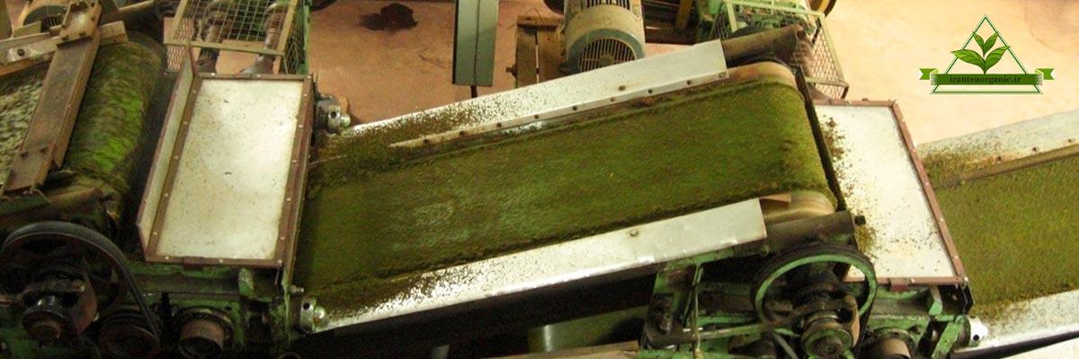چای سبز قلم ایرانی