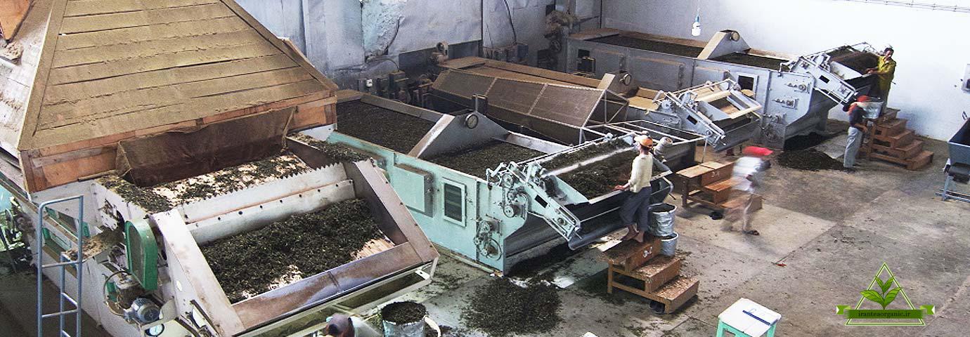 خرید چای ارگانیک ایرانی