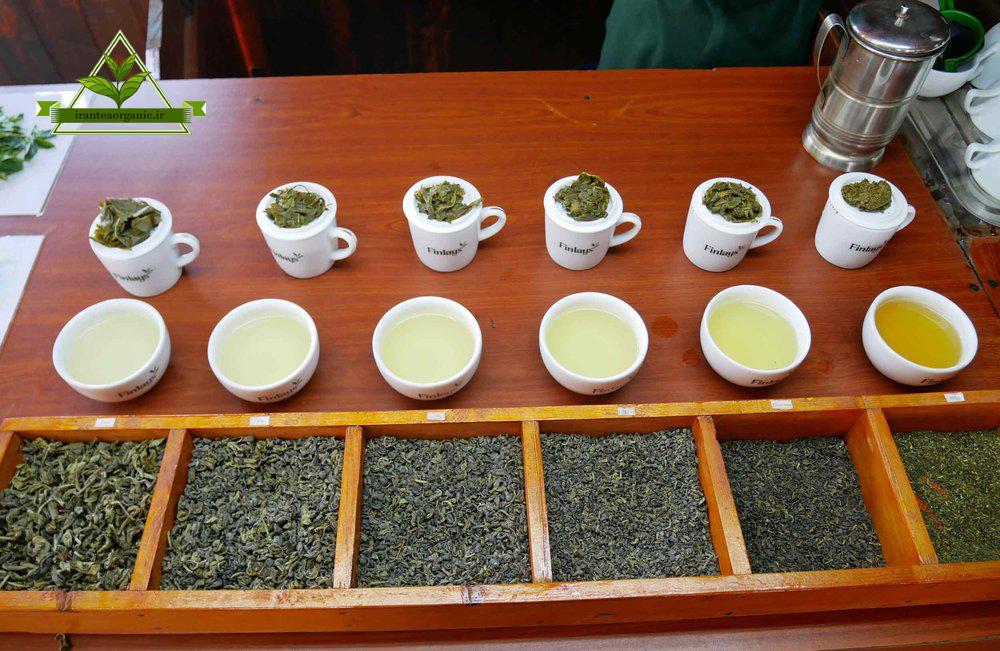 انواع چای سبز گیلان