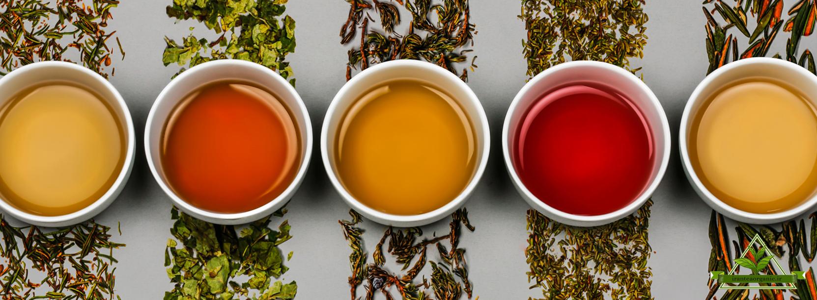 مرکز فروش بهترین چای شمال