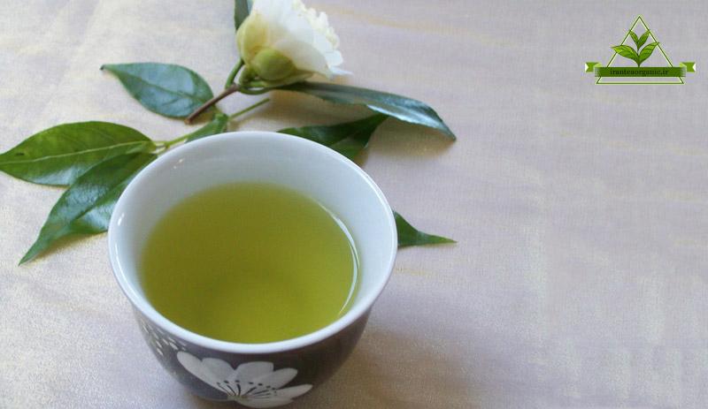 فروش چای سبز گیلان