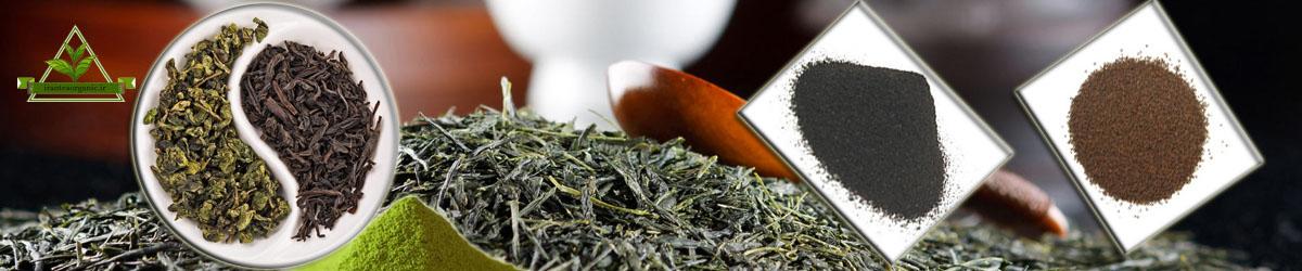 انواع چای ارگانیک شمال