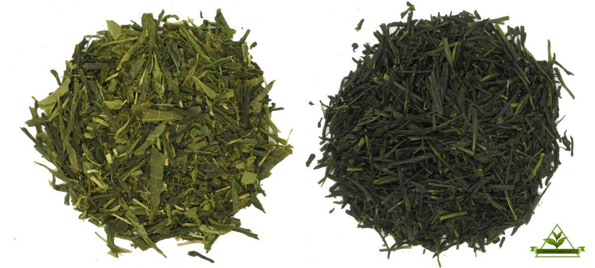 قیمت چای سبز لاهیجان
