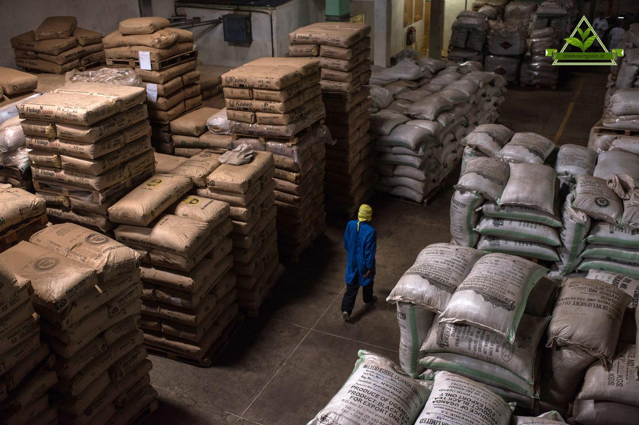 مرکز فروش چای صادراتی