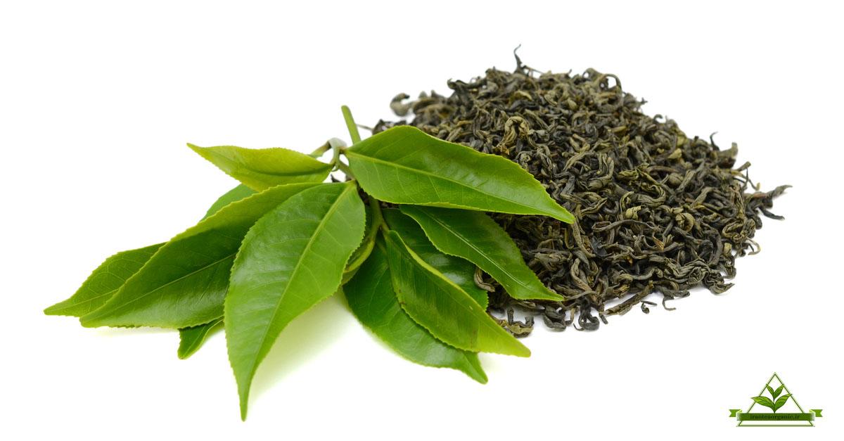 فروش چای سبز فله