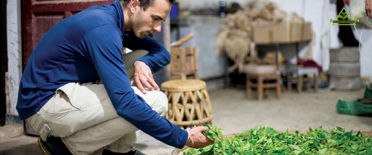 تجارت و فروش چای ایران