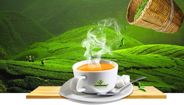 خرید آنلاین چای شمال ایران