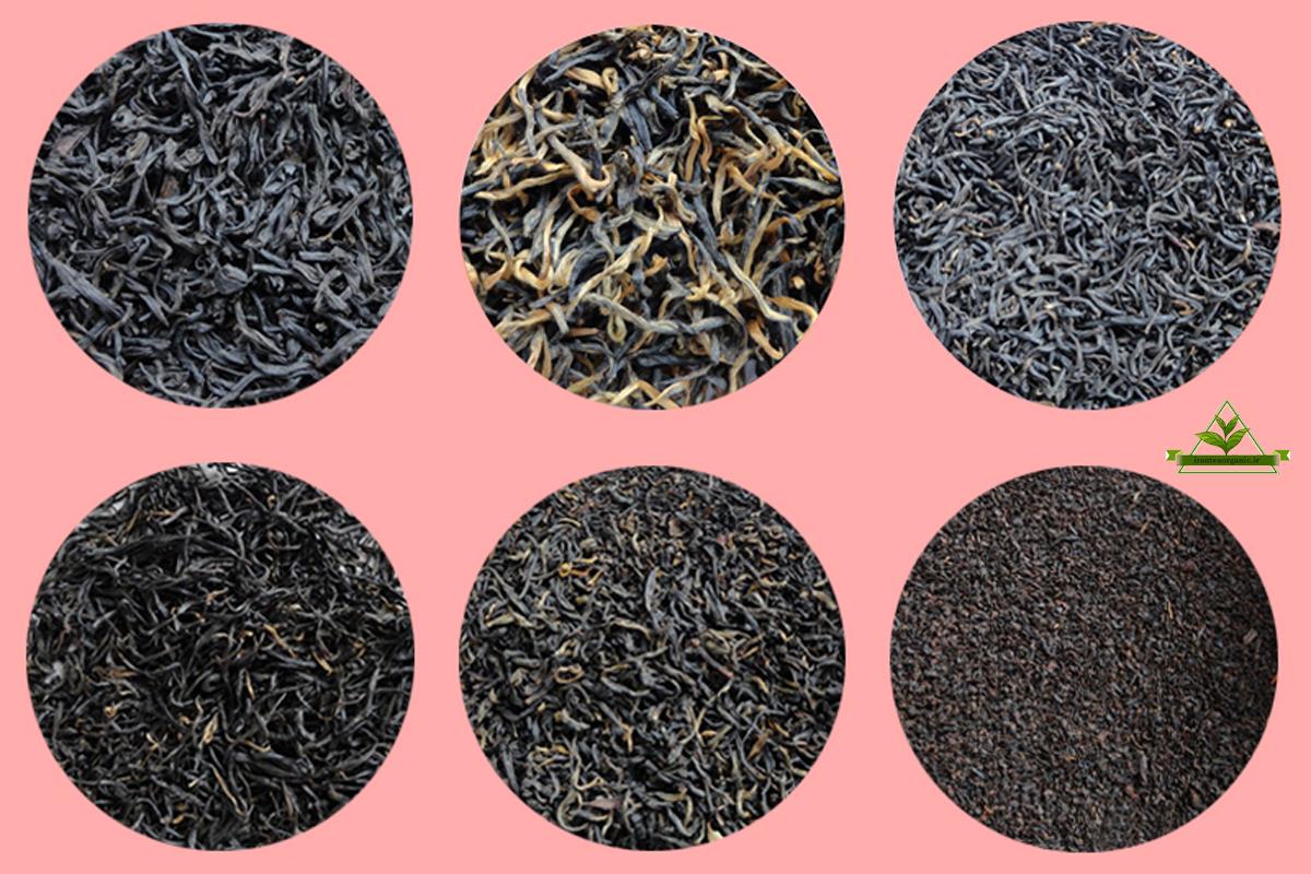انواع چای سیاه گیلان