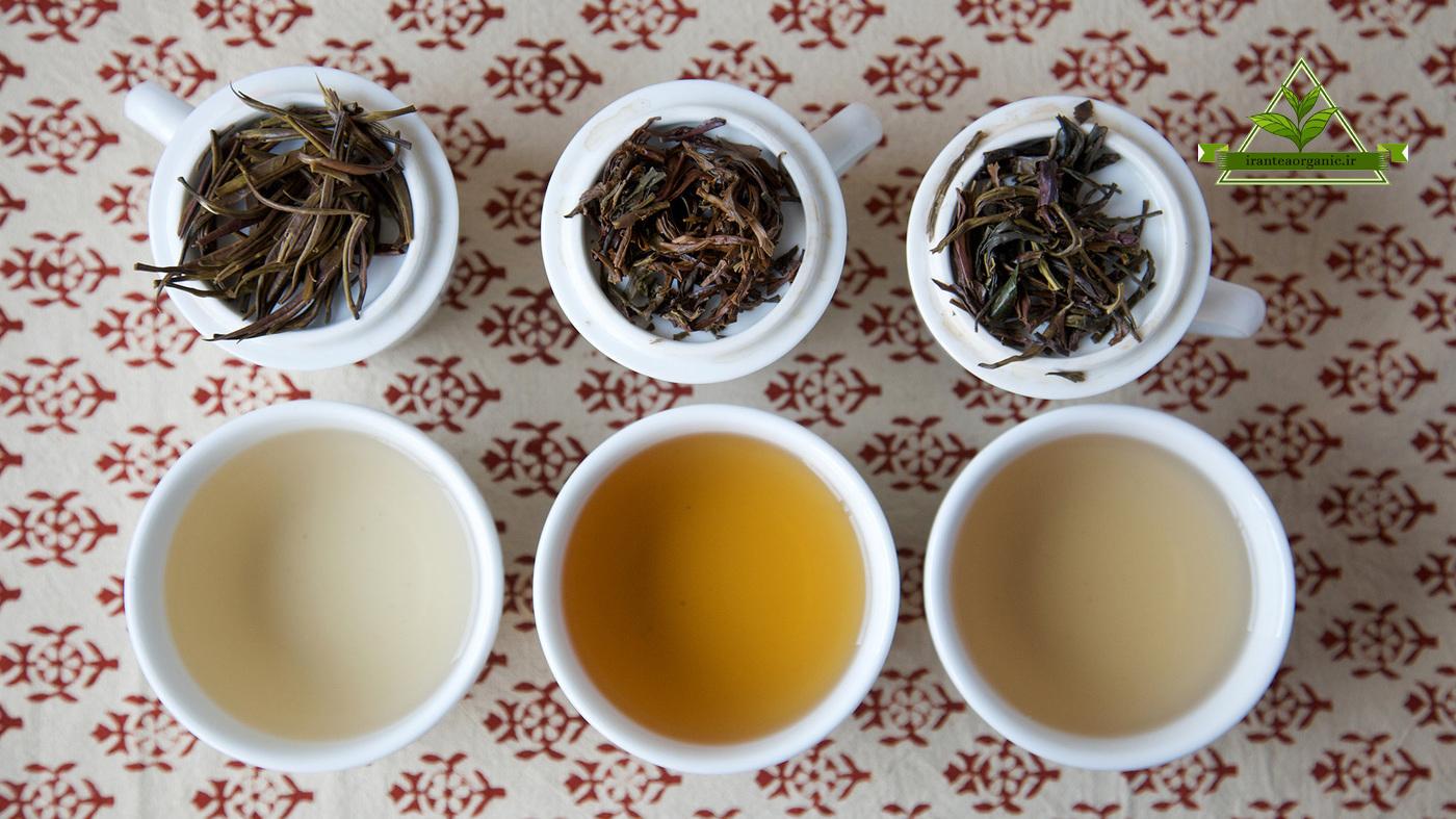 تنوع چای شمال