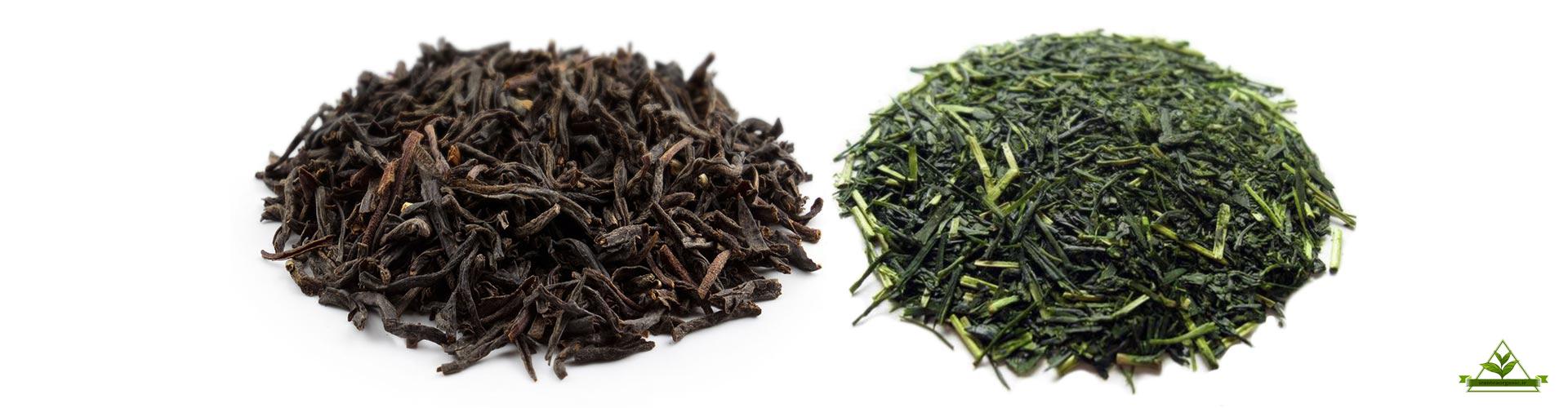 پخش چای ایرانی عمده