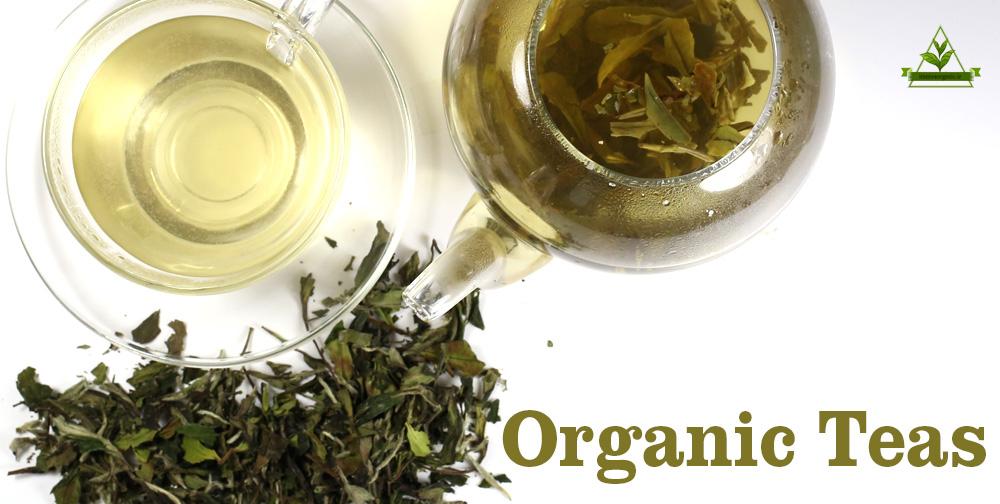 خرید چای سرگل بهاره ارگانیک