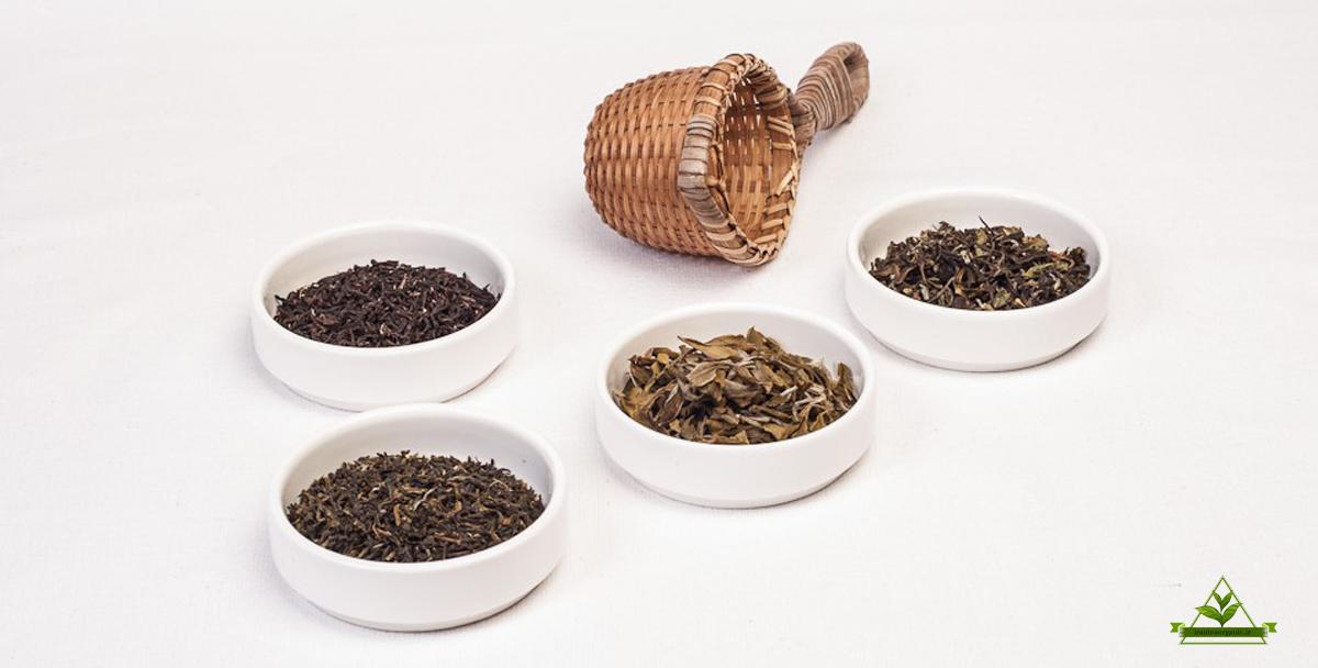 پخش چای ارگانیک ایرانی