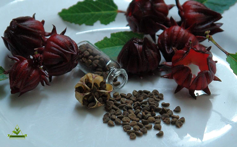 نمایندگی چای ترش ایرانی