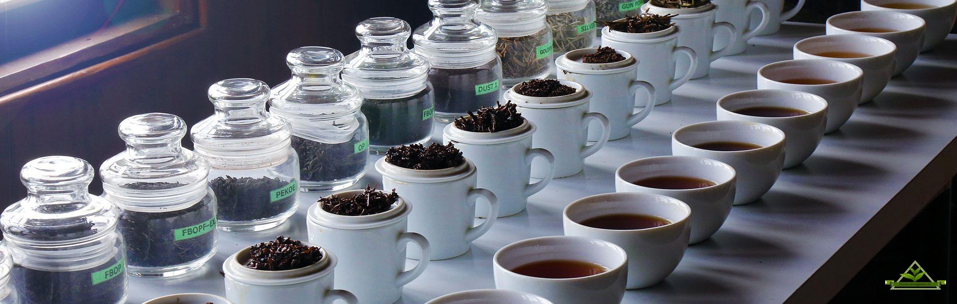 پخش عمده چای شمال در بازار