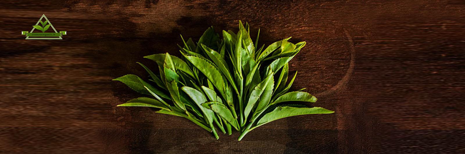 خرید اینترنتی چای سبز باروتی
