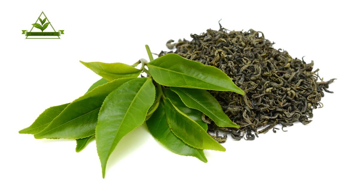 چای سبز شکسته شمال