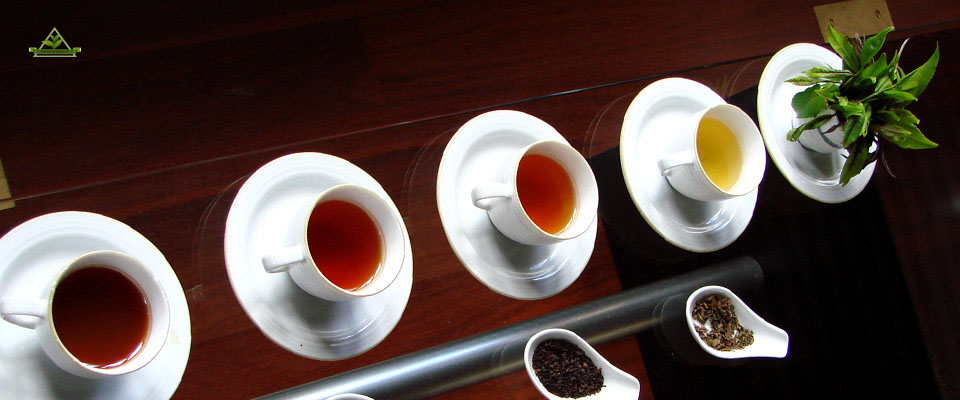 سفارش خرید چای محلی