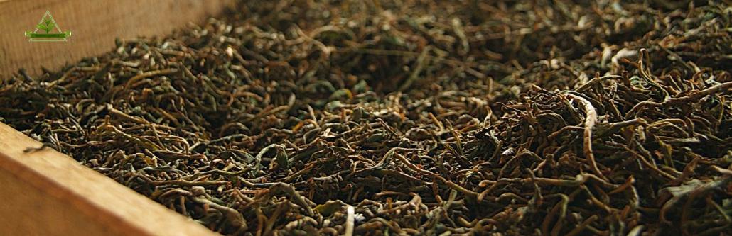 صادرات چای به سایر نقاط دنیا