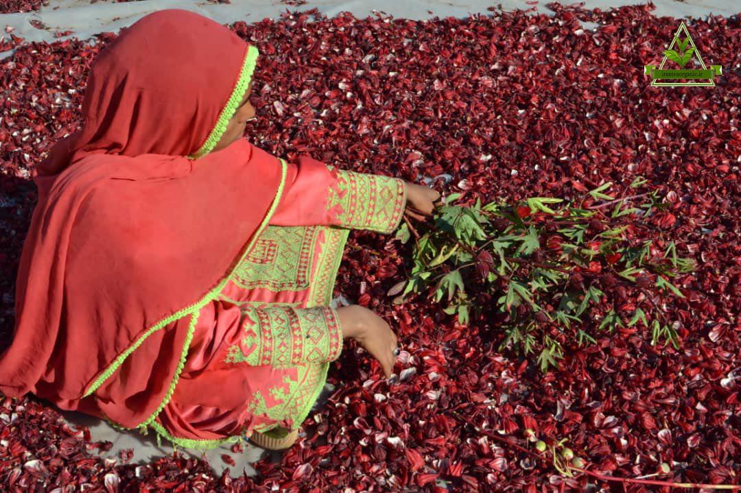 نمایندگی فروش چای ترش ایران