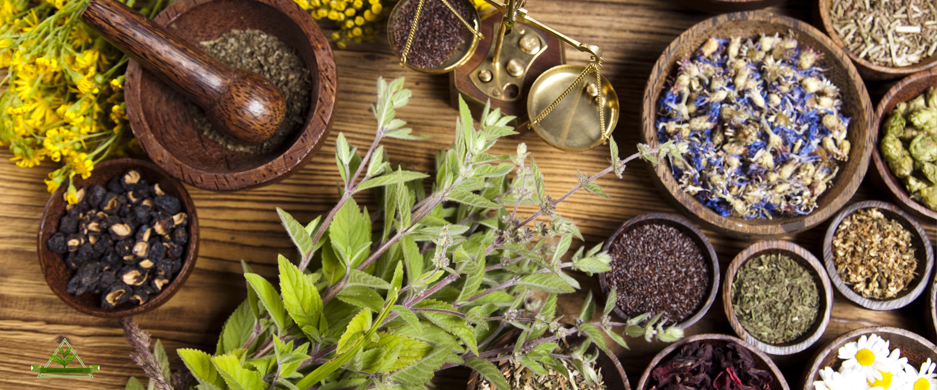 پخش عمده چای ایرانی