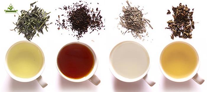 خرید و فروش بهترین چای شمال