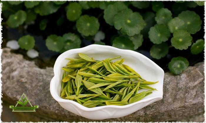 خرید و فروش انواع چای سیاه و چای سبز اصل لاهیجان