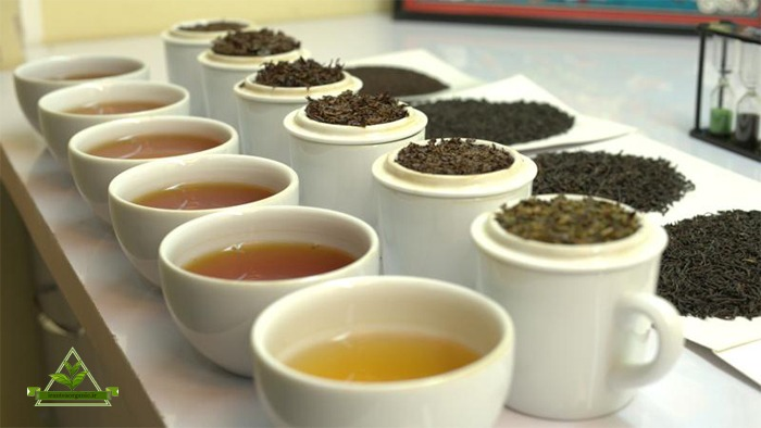 مرغوب ترین چای لاهیجان