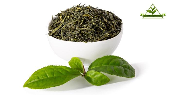 چای سبز درجه یک شمال