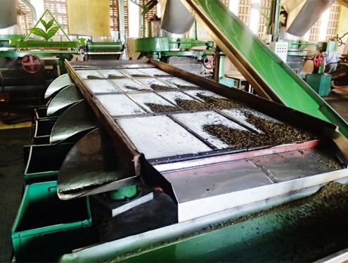 بهترین کارخانه چای ایران